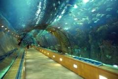 Akvarij_Valencia